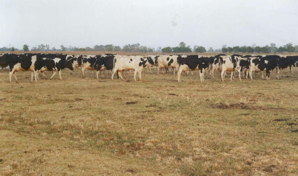 Dairy Industry Crisis Response to Extended Dry